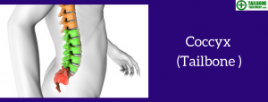 Coccyx   Tailbone Treatment